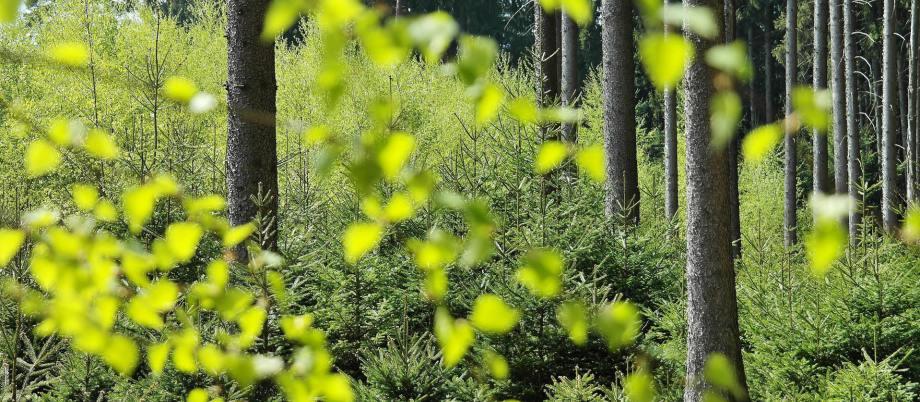 GN Medio Ambiente y voluntarios de Fundación  Telefónica plantan cientos de árboles en la  Comunidad de Madrid.